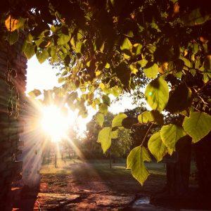 Foto de Cabecera Atardecer árbol - Facundo Daniel Tula